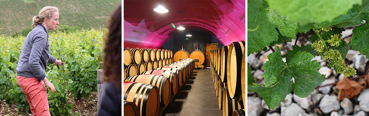 Vinitour