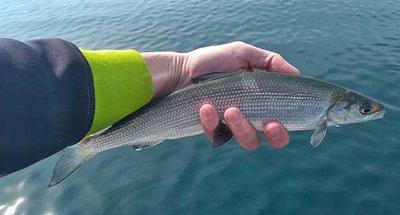 Croisière fluviale pour la pêche