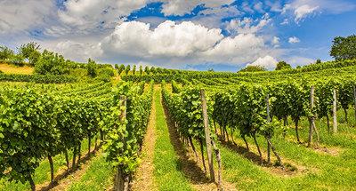 Vignobles traditionnels de Sancerre