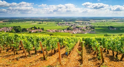 Vignobles dans la vallée de la Loire - Nivernais