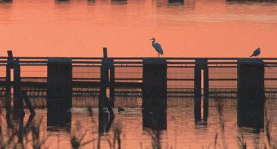 Coucher de soleil et oiseaux