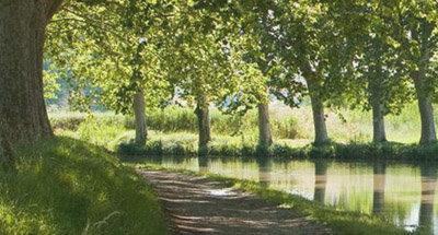 Arbres le long du Canal du Midi