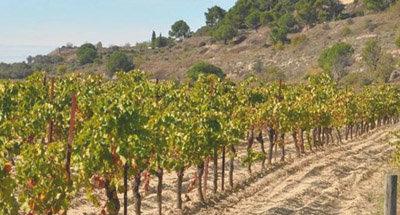 Vignobles sur le Canal du Midi