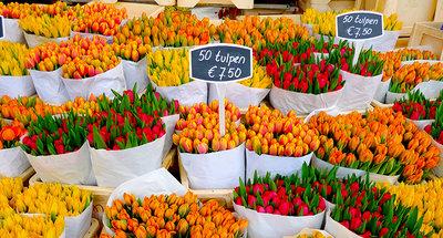 Marchés aux tulipes à Amsterdam