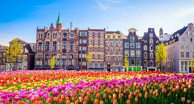 Champs de tulipes à Amsterdam
