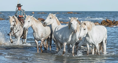 Nature in the Camargue