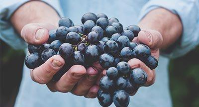 Une jolie grappe de raisins