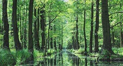 Forêt de la Spree (Spreewald) dans le Brandebourg