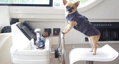 Nos suggestions pour des vacances avec son chien