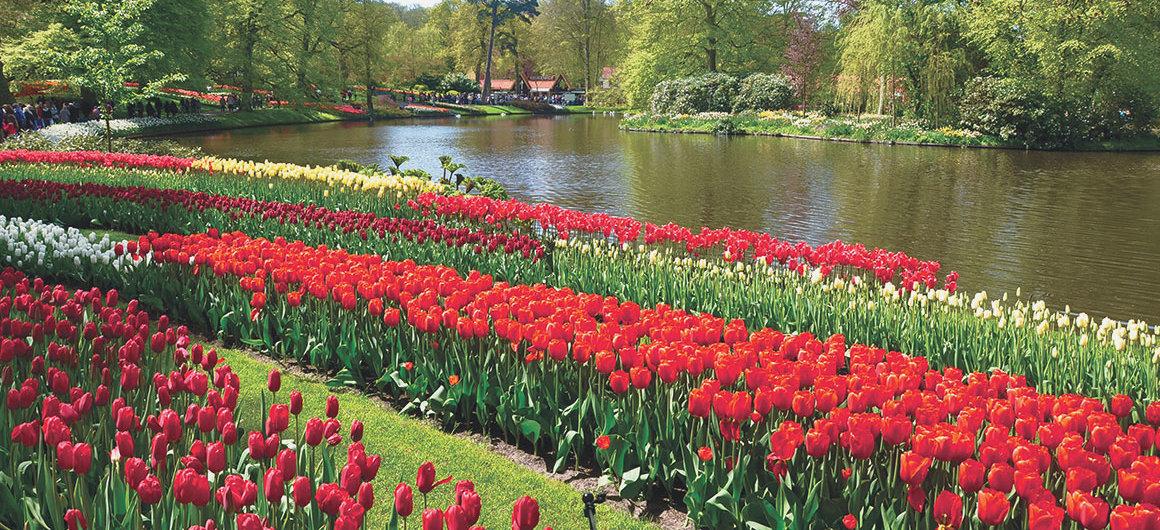 Tulipes du Keukenhof, Lisse, Pays-Bas