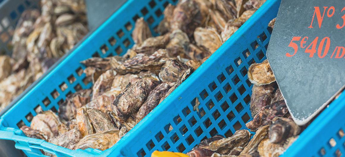Huîtres dans un seau