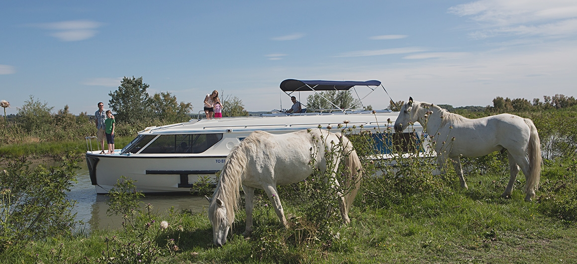 Vision et chevaux sauvages