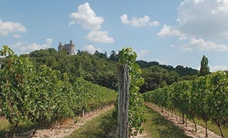 Les vignobles de Buzet en Aquitaine